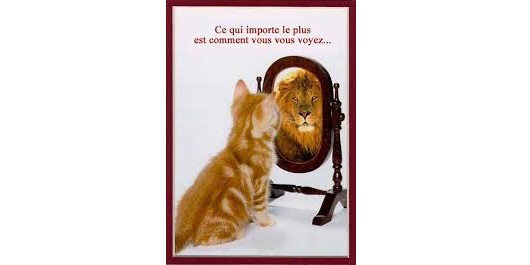le chat qui se voit lion1